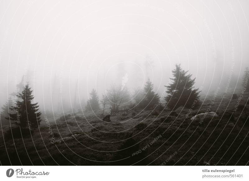 Still Nature Bad weather Fog Tree Forest Dark Natural Black Loneliness Bank of clouds Slope Fir tree Coniferous trees Stone Meadow Bushes Sadness Eerie