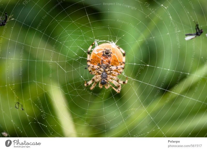 Big spider Nature Animal Yellow Natural Small Garden Bright Wild Fear Dangerous Insect Creepy Hunting Evil Trap Wilderness