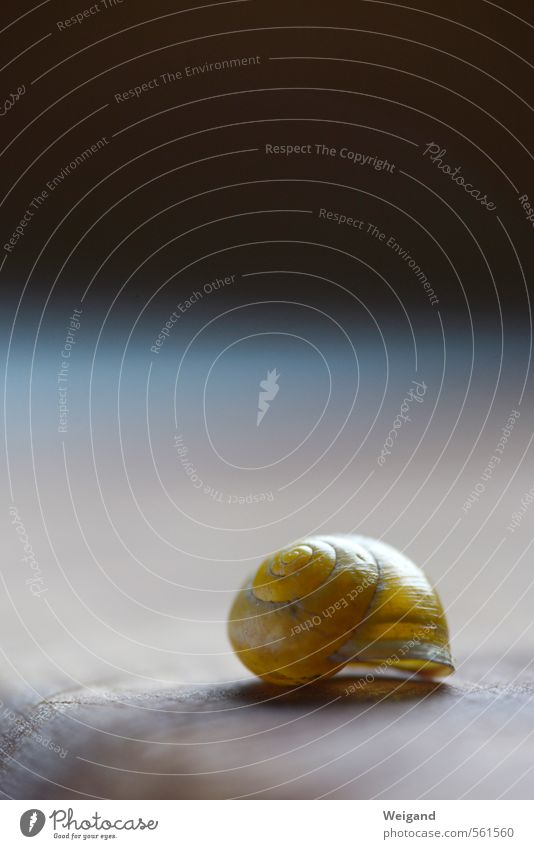 House of Time II Snail 1 Animal Dream Esthetic Natural Peaceful Goodness Attentive Dependability Prompt Conscientiously Caution Serene Patient Calm Hope Belief