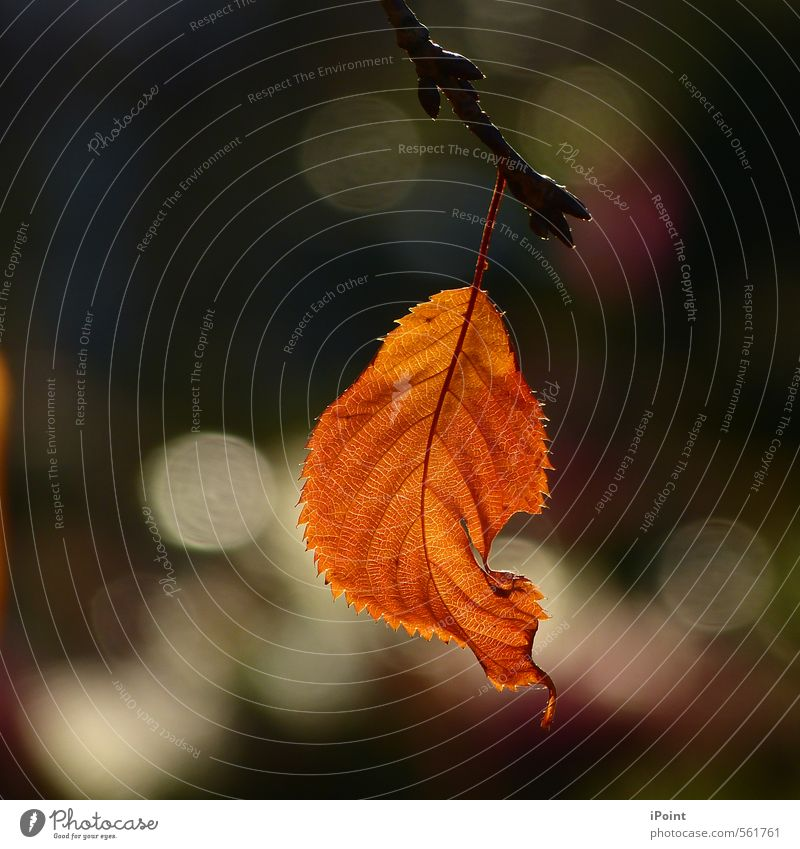 Nature Plant Beautiful Colour Leaf Calm Autumn Senior citizen Natural Death Freedom Art Moody Contentment Authentic Esthetic