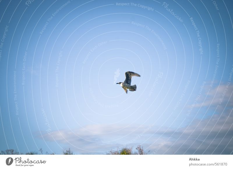 seagull Nature Sky Beautiful weather Wild animal Seagull 1 Animal Breathe Rutting season Running Movement Relaxation Flying Blue Emotions Moody Joy Happy