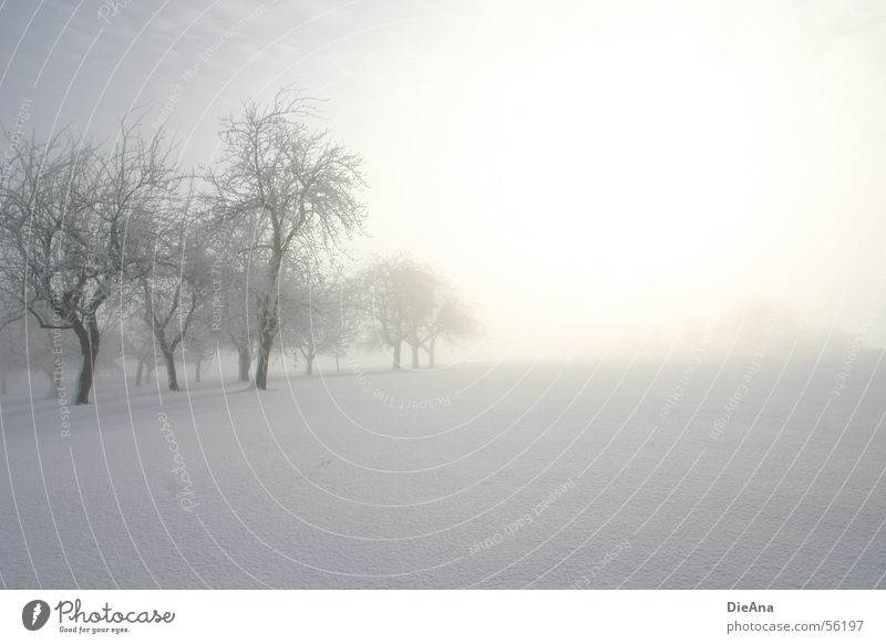 White Tree Sun Winter Cold Snow Fog Hope March Morning Snow layer