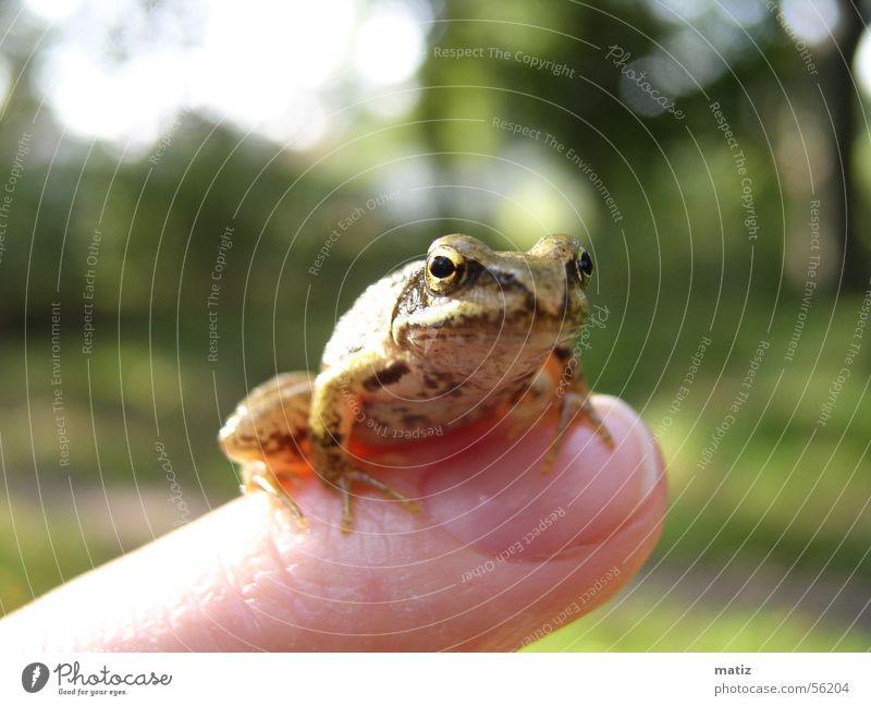 Frog or King Summer Nature Macro (Extreme close-up)