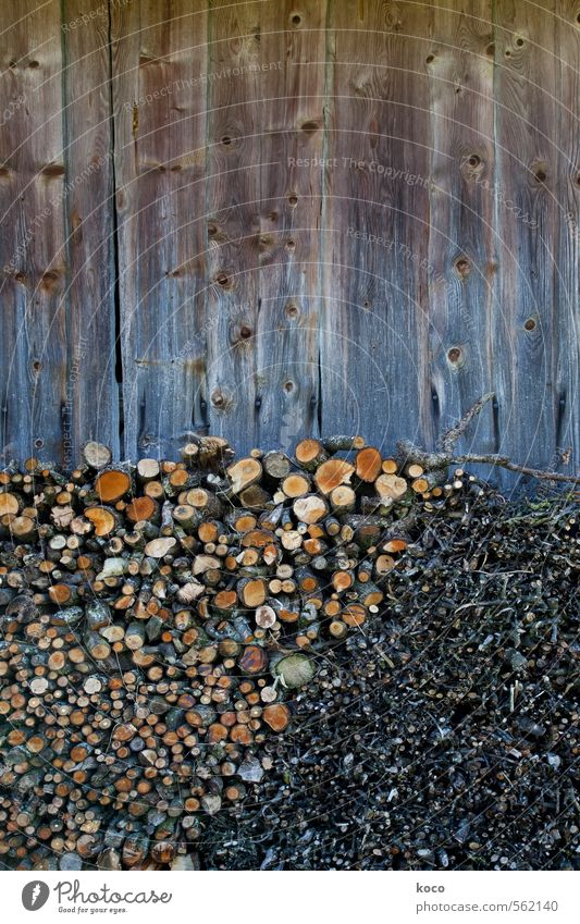 Stockpiling. Plant Tree Branch Wall (barrier) Wall (building) Facade Wood Line Sustainability Round Dry Brown Yellow Orange Black Orderliness Thrifty Supply