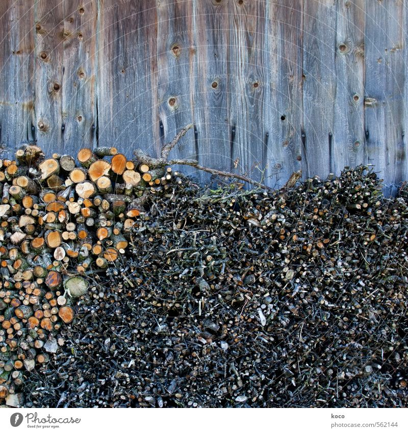 Old Tree Black Winter Environment Wall (building) Autumn Wall (barrier) Natural Gray Wood Brown Facade Orange Authentic Branch