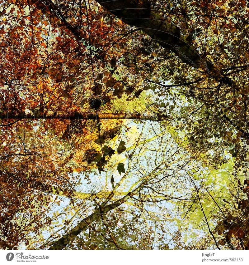 parted Nature Autumn Tree Forest To enjoy Hiking Simple Blue Brown Yellow Gold Green Attentive Serene Patient Contentment Hope Future Leaf Leaf canopy