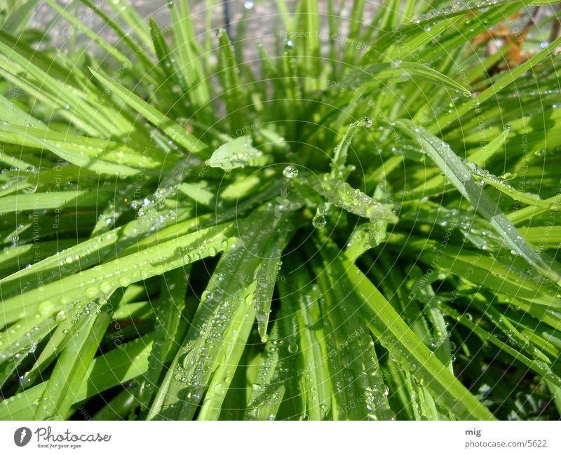 grass Water