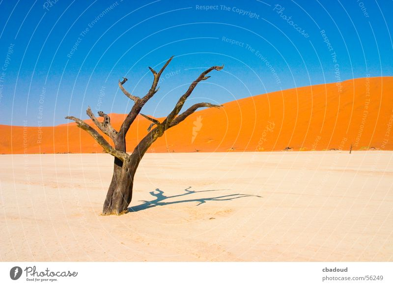 Dead Acacia Tree in Namib desert Landscape Sand Sky Cloudless sky Warmth Desert Serene Death Loneliness Namibia Leafless Colour photo Multicoloured