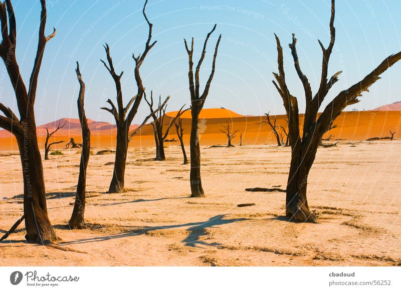 Dead Acacia Trees in Namib desert Loneliness Death Desert Namibia Leafless