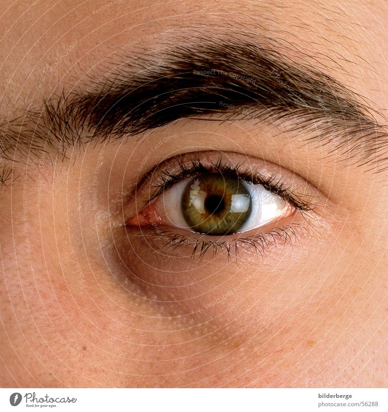 Eyes Eyelash Eyebrow Pupil Iris Contact lense