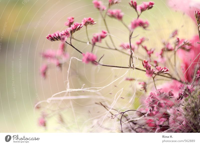 Plant Flower Pink Decoration String Blossoming Delicate Bouquet Smooth Twigs and branches