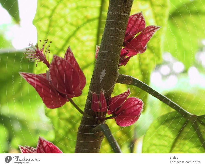 flower Nature holand