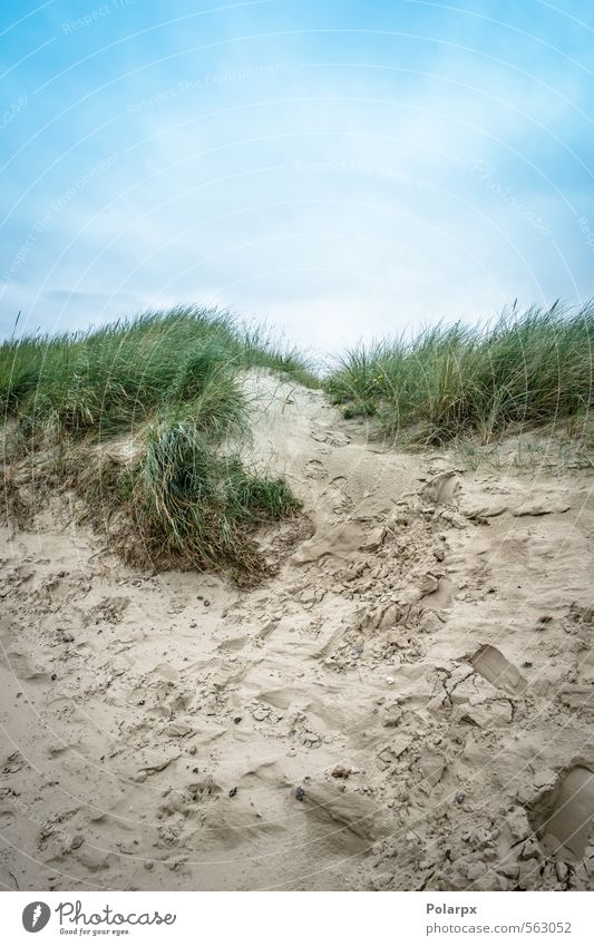 Sand and sky Beautiful Leisure and hobbies Vacation & Travel Summer Beach Ocean Nature Landscape Sky Clouds Weather Wind Grass Coast Footprint Natural Blue