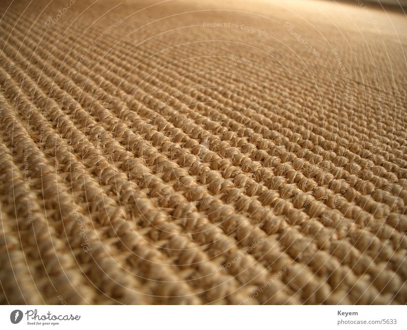 The carpet (?) Carpet Cloth Structures and shapes Macro (Extreme close-up) Close-up Floor covering Wood fiber
