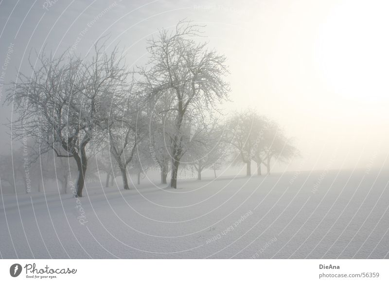 Still winter! Snow layer Cold Tree Sunrise Fog March Branch trees