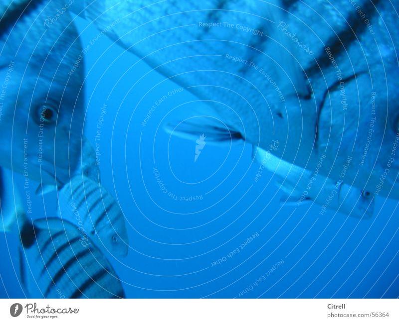 Water Ocean Blue Fish Near Dive Stripe Underwater photo