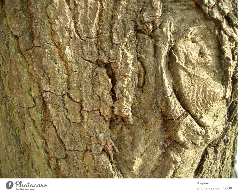 The tree bark Tree Tree bark Plant Wood Green Structures and shapes Nature