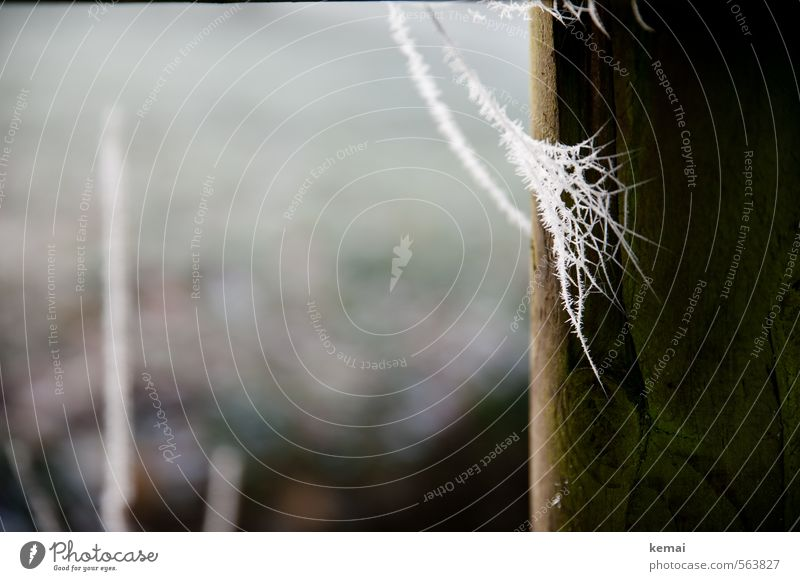 frost Environment Nature Winter Ice Frost Pole Spider's web Wood Cold Brown White Frozen Fine Delicate Hoar frost Colour photo Exterior shot Close-up Detail