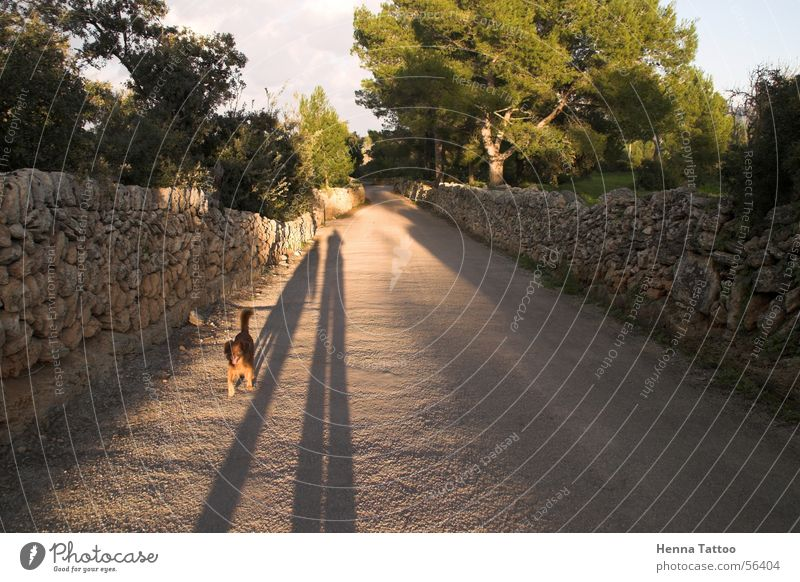sombras Dog To go for a walk Shadow Street Lanes & trails Street dog