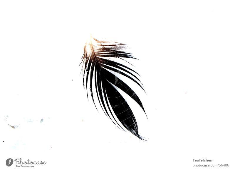 Sun Ocean Beach Winter Sand Bird Lighting Wing Feather Easy Denmark