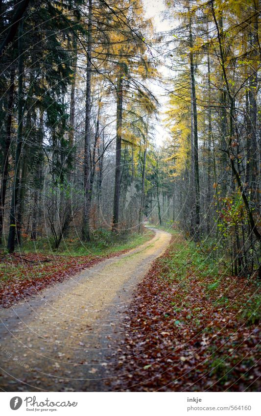 . Trip Far-off places Hiking Environment Nature Animal Autumn Winter Beautiful weather Fog Deciduous tree Leaf Tree Forest Footpath Promenade Mixed forest