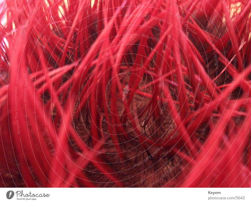 Red Hair and hairstyles Punk Thorny Gel Macro (Extreme close-up)