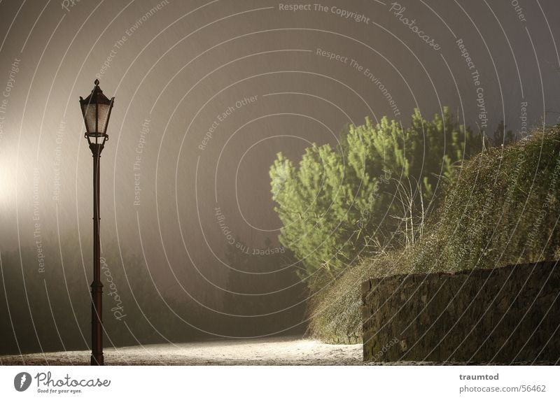 Tree Dark Sadness Rain Moody Fog Bushes Lantern Detective novel Sherlock Holmes