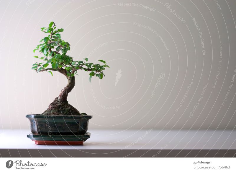 bonsai Bonsar Japan Minimal Small Puristic Japanese garden Tree Asia Zen Feng Shui Yin and Yang Tokyo Structures and shapes Beautiful Nature Root Minimalistic