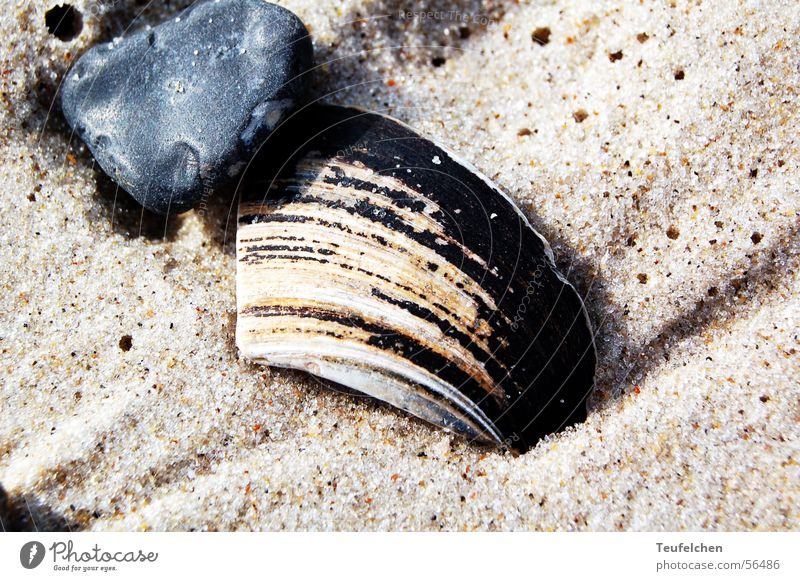 beach shell Mussel Beach Gravel Ocean Low tide Winter Sand Stone Earth Water North Sea Denmark High tide Sun