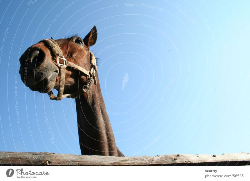 Sky Blue Wood Brown Horse Fence Neck Bridle Wooden fence Horse's head