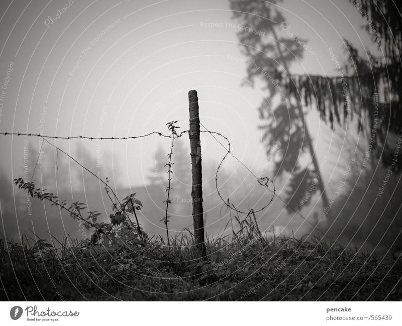 in upheaval Environment Nature Landscape Elements Autumn Fog Tree Grass Bushes Field Forest House (Residential Structure) farm Sign Senior citizen Mysterious