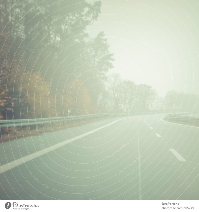 Sky Nature Plant Tree Landscape Clouds Environment Street Autumn Movement Lanes & trails Gray Line Fog Transport Signs and labeling