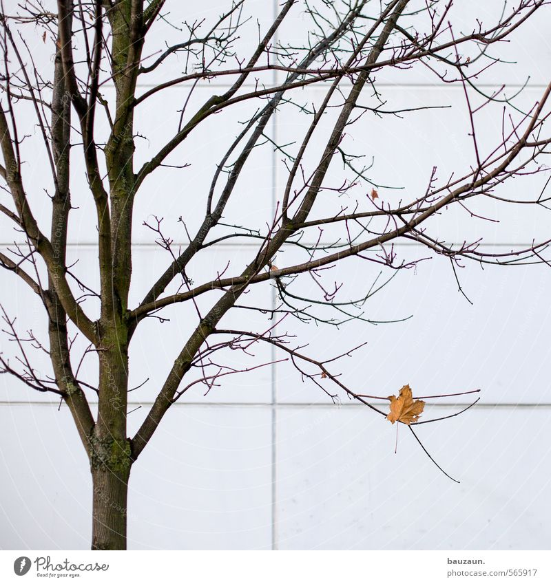 City Beautiful White Plant Tree Loneliness Calm Leaf Winter Yellow Wall (building) Autumn Wall (barrier) Wood Above Line