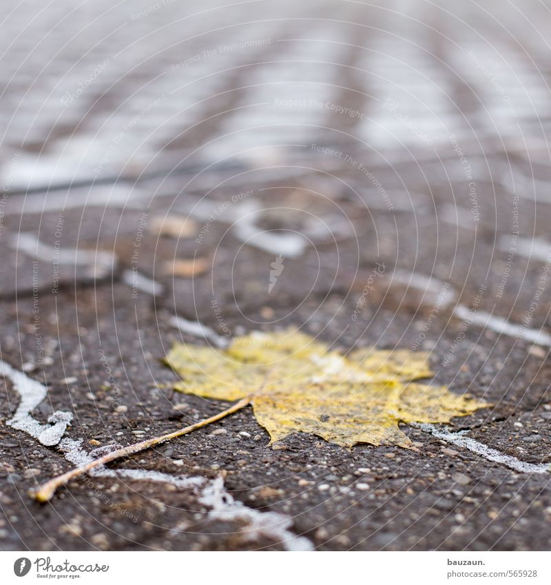 deadlocked. Gardening Winter Ice Frost Plant Leaf Park Town Places Marketplace Terrace Street Lanes & trails Stone Concrete Freeze Lie To dry up Firm Cold