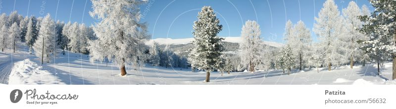 Sky Tree Winter Snow Mountain Landscape
