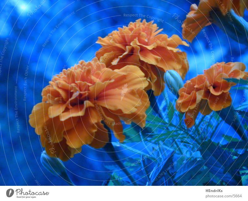 little flowers Plant Flower Nature