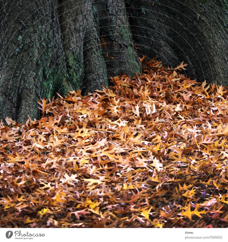 autumn gratin Environment Nature Landscape Plant Autumn Leaf Tree Tree trunk Autumn leaves Park Lie Peaceful Serene Calm Truth Wisdom Fatigue Esthetic