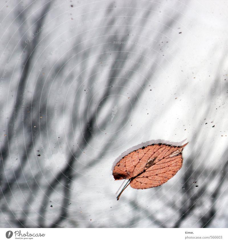 Beautiful Leaf Environment Life Autumn Emotions Death Lie Car Transport Esthetic Branch Transience Uniqueness Change Protection