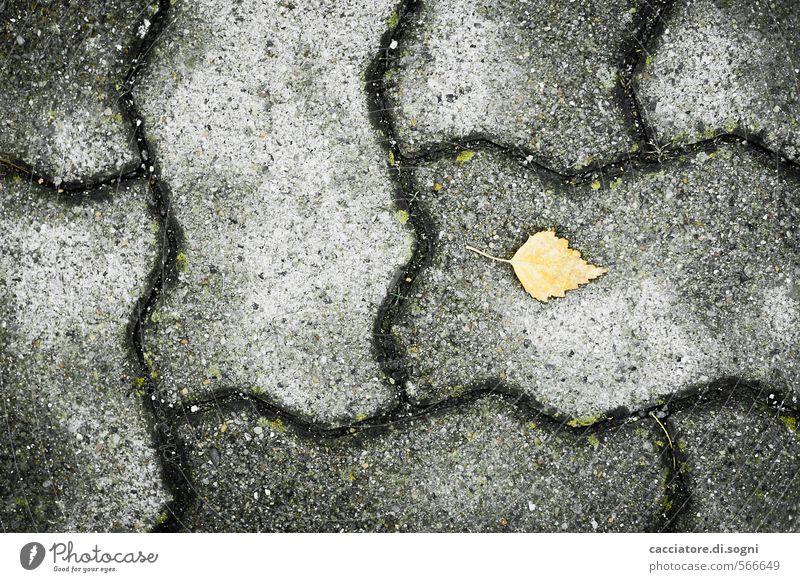 City Loneliness Leaf Dark Yellow Environment Street Sadness Autumn Funny Gray Small Line Gloomy Threat Cute