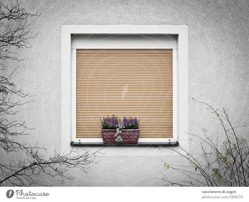 Home sweet home Environment Autumn Bushes Window Roller shutter Window box Simple Kitsch Gloomy Town Gray Orange Safety Protection Safety (feeling of) Calm