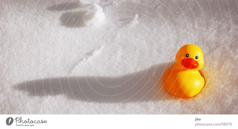 duckling small... Squeak duck Yellow Red White Late Misplaced Duck Snow Shadow long shadow in the snow Sun