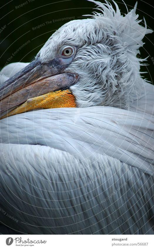 Zoo Florida