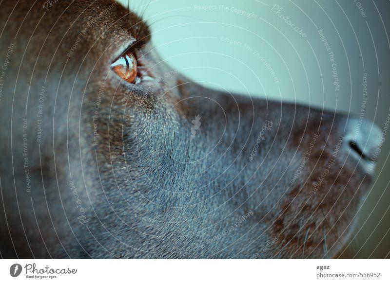 Sharky's Profile Animal Pet Dog Pelt 1 Friendliness Glittering Good Positive Brown Emotions Trust Safety Protection Safety (feeling of) Loyal Sympathy