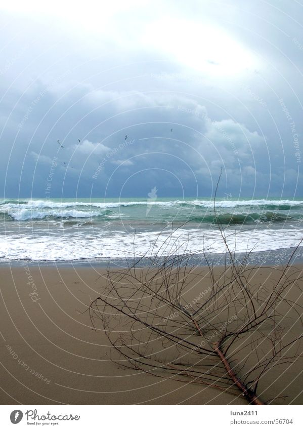 A day at the beach Beach Waves Ocean Clouds Passion Lake Surf Swell White crest Flotsam and jetsam Coast Sand Sky Branch