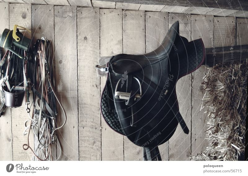 l´appui Horse Barn Wood Stapes Leather Bridle Wooden board Equestrian sports Saddle