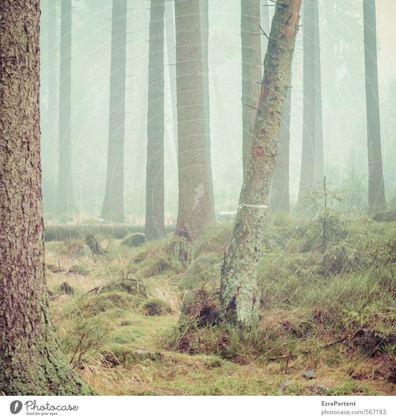 ||||/|| Environment Nature Landscape Plant Earth Air Water Autumn Climate Weather Bad weather Fog Tree Grass Moss Forest Wood Line Esthetic Cold Wet Brown Gray