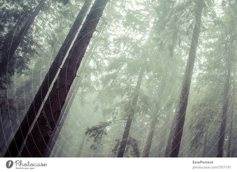 Sky Nature Green Plant Tree Landscape Forest Dark Cold Environment Sadness Autumn Gray Wood Brown Weather