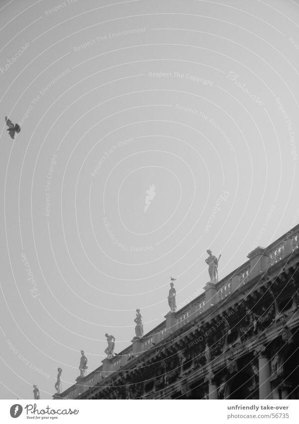 2 birds Bird Venice Statue Classic Sky Black & white photo Flying