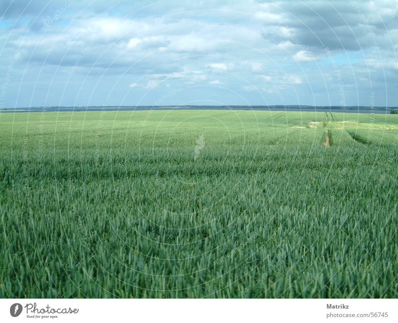 field Field Green Immature Skid marks Clouds Summer Horizon Far-off places Bad weather Relaxation Exterior shot Sky Rain Blue Freedom cloudy