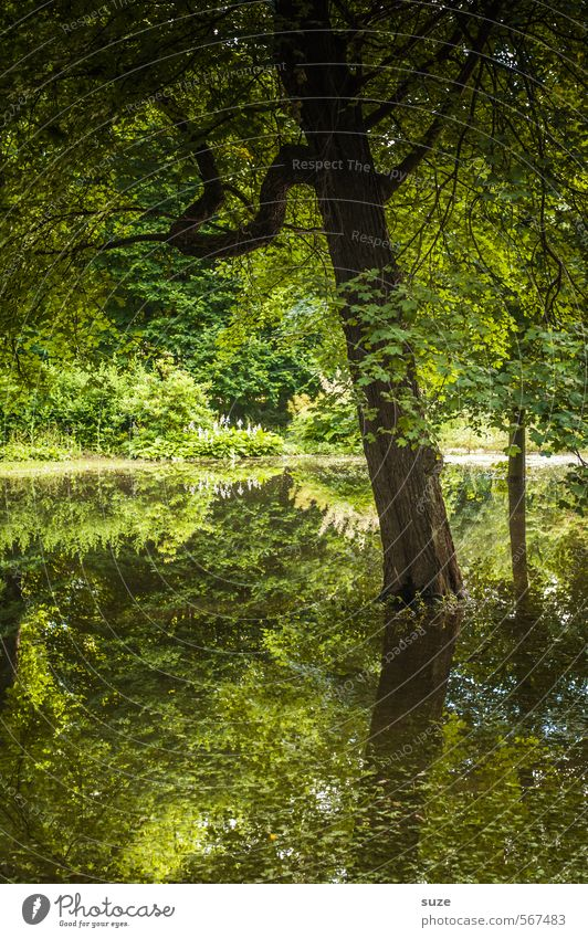natural green Environment Nature Landscape Plant Elements Water Climate Tree Park Lakeside Bog Marsh Pond Oasis Sustainability Green Moody Growth Change